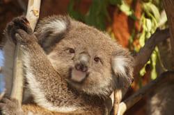 australia3