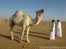 saudiarabia2